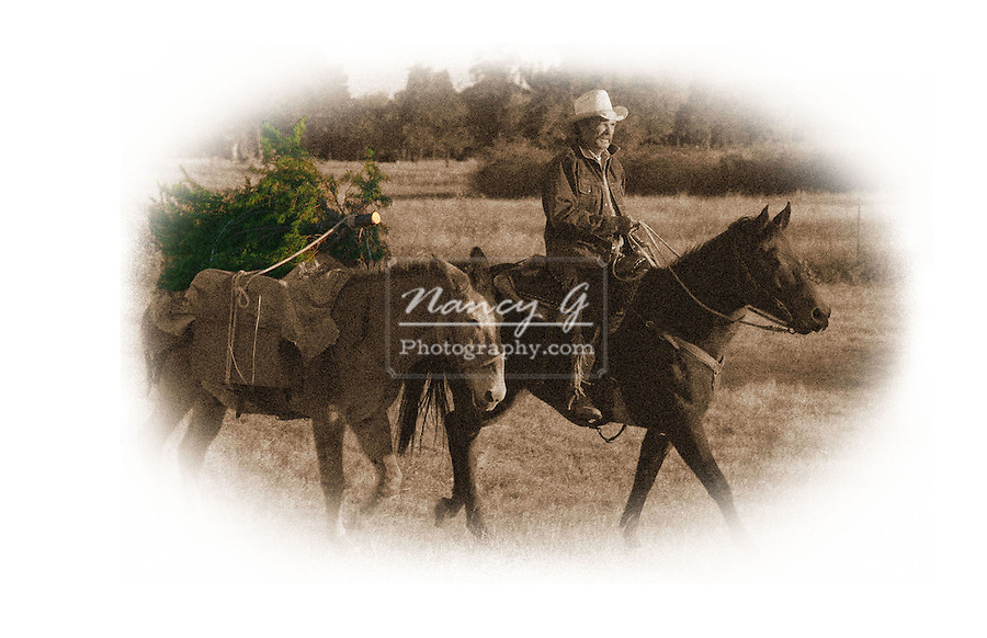 Sepia toned cowboy bringing home the Christmas tree in color Western style