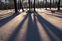 Snow and shadows at Canatara Park, Sarnia