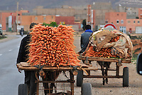 Farmer transporting carrots vor selling