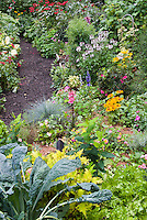 Lush variety of plants in garden views scenics, wide, summer, Rudbeckia, Kale Lacinata blue vegetable, Festuca, Lobelia Fan Scarlet, Cleome Senorita Blush, Solenostemon, Lettuce, Hypericum hybrid, Verbena, Salvia officinalis Variegata, Roses 'O So Smoothie', Pelargonium Contrast, Hosta Great Expectations, Monarda Cambridge Scarlet, annual Begonias, Dianthus barbatus, Lilium, mulched garden path, pine needle much, Salvia farincacea, Heucher, Rhododendron Azalea, Rubus black raspberries, raised beds, mix of perennials, annuals, shrubs, vegetables, summer flowering bulbs, edibles, herbs, flowers and foliage aka Cavalo Nero kale