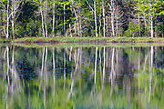 Reflection of forest in Elbow Pond in North Woodstock, New Hampshire during the spring months. Species of fish in Elbow Pond include chain pickerel, yellow perch and smallmouth bass. This area was logged during the Gordon Pond Railroad era (1907-1916).