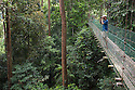 Tourist birdwatching on canopy walkway in tropical rainforest. Maliau Basin, Sabah, Borneo.
