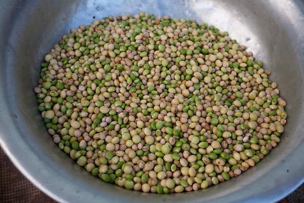 Chapada do Norte_MG, Brasil...Graos de feijao andu...Some grains of Cajanus cajan (bean)...Foto: LEO DRUMOND / NITRO