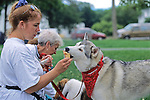 Siberian Husky Eating Ice Cream