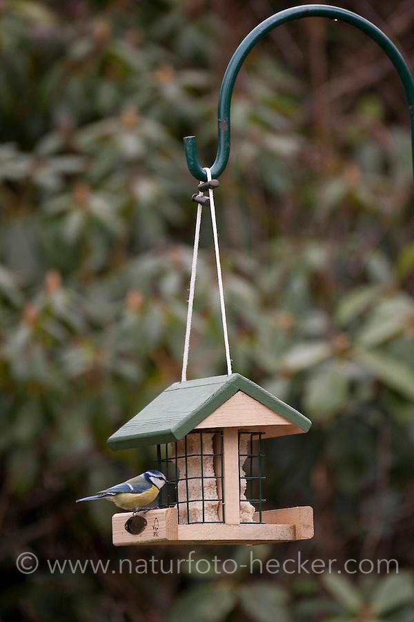 Blaumeise, Cyanistes caeruleus, Parus caeruleus an einem Futterhäuschen mit Fettfutter, Vogelfutterhäuschen, Vogelfutterhaus, Vogelfutter, Energiekuchen, blue tit
