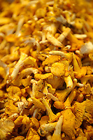 Fresh Finferle and Finfirli Italian chanterelle mushrooms - Rialto Market Venice