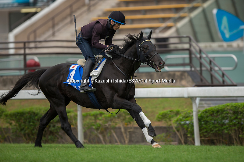 DEC 12,2015: Fiero ,trained by Hideaki Fujiwara,exercises in preparation for the Hong Kong Mile at Sha Tin in New Territories,Hong Kong. Kazushi Ishida/ESW/CSM