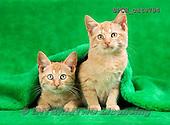 Xavier, ANIMALS, REALISTISCHE TIERE, ANIMALES REALISTICOS, cats, photos+++++,SPCHCATS794,#a#