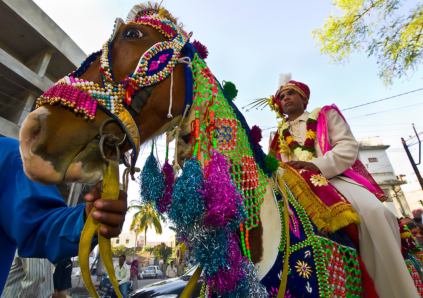 Bride groom riding a horse in a wedding procession, Udaipur, Rajasthan, India