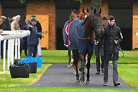 Horses enter the parade ring prior to the first race during Horse Racing at Salisbury Racecourse on 14th August 2019