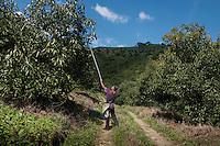 Jesus Alberto Solis Jacoba a laborer at Abel Perez Jimenez´avacado plantation in the foothills of the sierra near Jalisco, Nayarit, Mexico