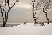 &quot;Nemesis&quot;<br />