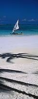Afrique/Afrique de l'Est/Tanzanie/Zanzibar/Ile Unguja/Kiwenga: la plage et les boutres des pécheurs