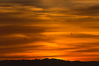 A half dozen gulls, tiny dots on a blazing sky at sunset along San Francisco Bay.