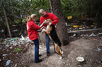 """BULGARIA, Sofia, 2012/04/13..Yavor Gechev, marketing director of the animal welfare organization """"Four Paws"""" (Four Paws) and Marina Ivanova,  veterinary of the organisation, embrace the watchdog in an open parking in the center of Sofia, Bulgaria during a vaccination operation and injection ID chip..BULGARIE, Sofia, 2012/04/13..Yavor Gechev, directeur marketing de l'organisation de protection des animaux """"Four Paws"""" (Quatre Pattes) et Marina Ivanova, vétérinaire de l'organistion étreignent le chien de garde d'un parking ouvert dans le centre de Sofia, Bulgarie lors d'une opération de vaccination et d'injection de puce d'identification..© Pierre Marsaut"""