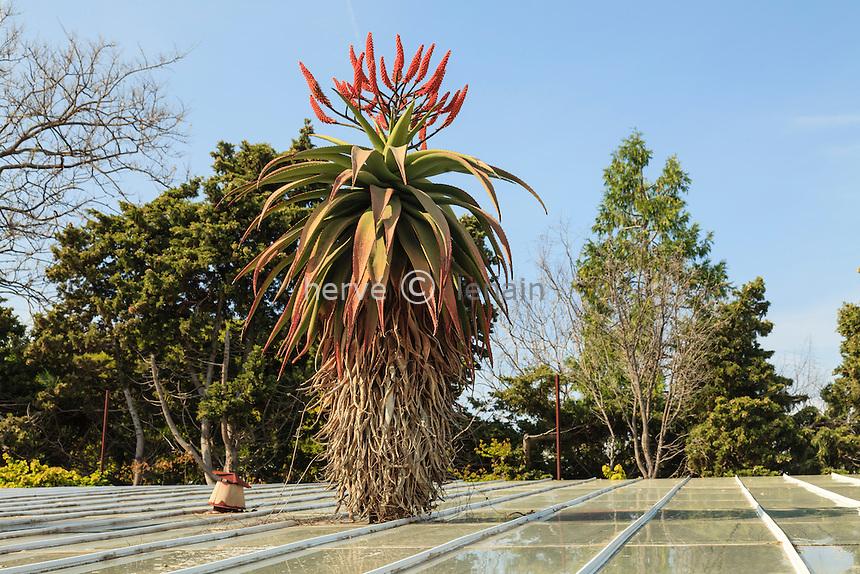 France, Alpes-Maritimes (06), Saint-Jean-Cap-Ferrat, le jardin botanique des C&egrave;dres:<br /> serre avec Aloes d&eacute;passant du toit.