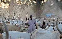 Afrika SUED-SUDAN  Bahr el Ghazal region , Lakes State, Dinka Hirten mit Zeburindern im cattle camp  | .Africa SOUTH SUDAN  Bahr al Ghazal region , Lakes State, Dinka shepherd with Zebu cow in cattle camp