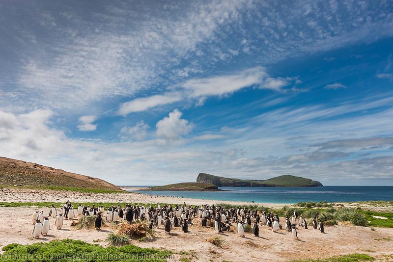 Carcass Island, with gentoo and Magellanic penguins, New Island, Falkland Islands.