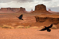 Ravens take to the air at John Ford's Point at the Monument Valley Navajo Tribal Park in southern Utah, Friday, March 10, 2006. The stunning vistas in the park, stars in many John Ford westerns, are an often-forgotten destination for American travelers. (Kevin Moloney for the New York Times)
