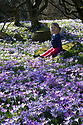 21/01/19<br /> <br /> As the spring weather heats-up, two-year-old Oceane Soleil marvels at the crocuses blooming at the University of Leicester Botanic Gardens in Oadby.<br /> <br /> All Rights Reserved, F Stop Press Ltd +44 (0)7765 242650  www.fstoppress.com rod@fstoppress.com