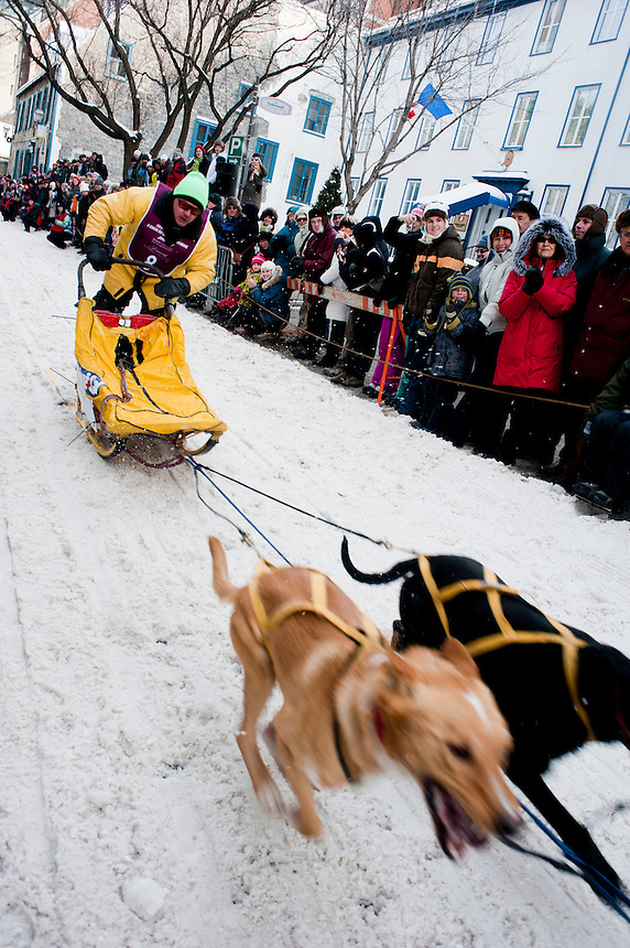 Dog sledding races through the streets of downtown Quebec, Winter Carnival in Quebec City, Canada
