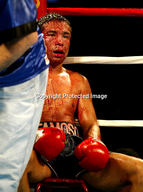 """10/3/03,LOS ANGELES,CALIFORNIA --- IBF Jr. Lightweight Champion Carlos """"Famoso"""" Hernandez wins a technical decision over Steve Forbes to retain his title at the STAPLES Center on Saturday, October 4. --- Photo by Chris Farina  copyright 2003    702-367-3063"""