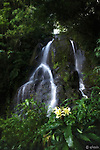 Hiked up Nu'uanu valley through Phyllis Guard's house on Oct 6, 2012 before sunrise to get to this secluded and undisturbed waterfall called Luakaha Falls. It was serene and gorgeous.