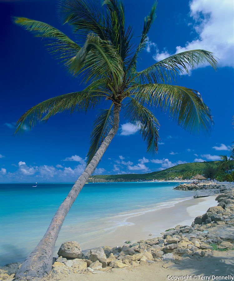 Antigua, West Indies   <br /> Palm tree frmaing the view of Dickinson Bay distant Weatherills Point - Caribbean Islands