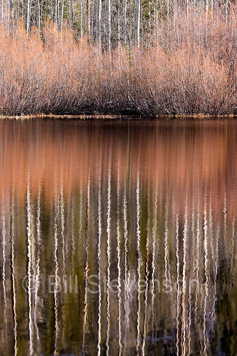 A photo of aspen trees and bushes reflecting in a pond near Lake Tahoe in Nevada