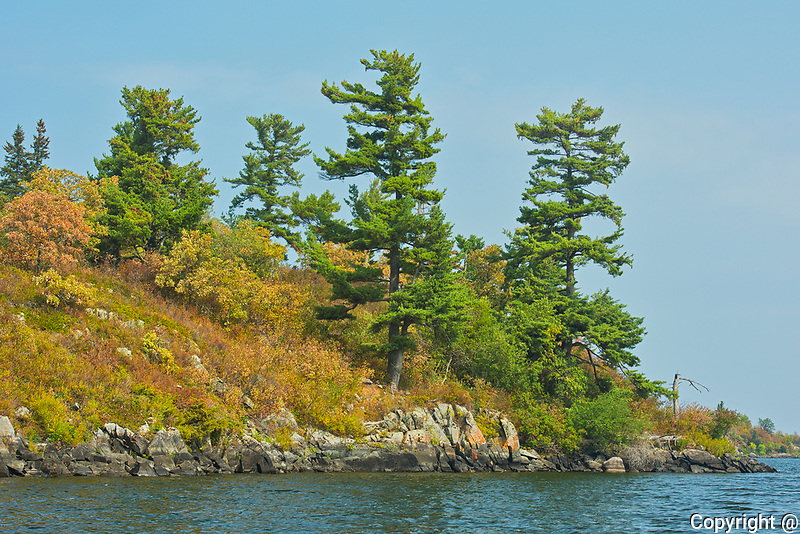 White pines on Island on Lake of the Woods<br />Kenora District<br />Ontario<br />Canada