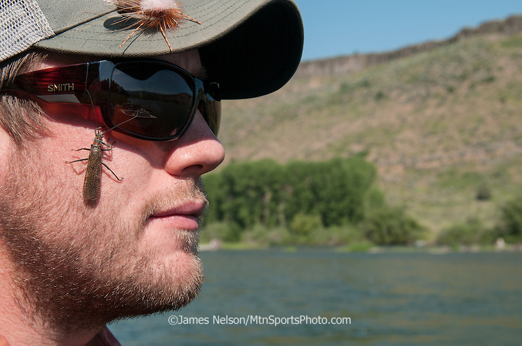 A giant salmonfly (Pteronarcys californica) crawls on the sunglasses of a fly fisherman on the South Fork of the Snake River, Idaho.