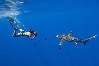 Woman photographs large oceanic white tip shark with attendant pilot fish , Carcharhinus longimanus, kona ,Hawaii