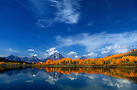 749450388 fall colored aspens line the base of mount moran and the tetons at the oxbow bend of the snake river in grand tetons national park wyoming