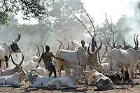 SOUTH SUDAN Bahr al Ghazal region , Lakes State, village Yeri cattle camp near Rumbek, Dinka shepherd with Zebu cow / SUED-SUDAN  Bahr el Ghazal region , Lakes State, Dorf Yeri, Dinka mit Zebu Rindern im cattle camp bei Rumbek