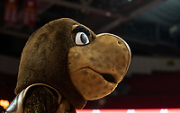 COLLEGE PARK, MD - NOVEMBER 20: Testudo mascot of Maryland during a game between George Washington University and University of Maryland at Xfinity Center on November 20, 2019 in College Park, Maryland.