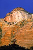 Tree silhouetted against redrock, sunrise, Zion National Park, Utah. Utah, Zion National Park.