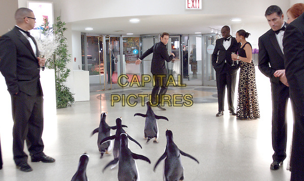 Jim Carrey.in Mr. Popper's Penguins.*Filmstill - Editorial Use Only*.CAP/FB.Supplied by Capital Pictures.
