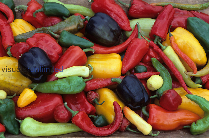 Heirloom Sweet Pepper harvest.