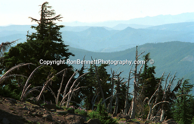 Oregon mountain range, USA, Pacific Ocean, Plains, woods, mountains, rain forest, desert, rain, Rose City, Portland, Lake Oswego, Pacific Northwest, Fine Art Photography by Ron Bennett, Fine Art, Fine Art photography, Art Photography, Copyright RonBennettPhotography.com © Fine Art Photography by Ron Bennett, Fine Art, Fine Art photography, Art Photography, Copyright RonBennettPhotography.com ©