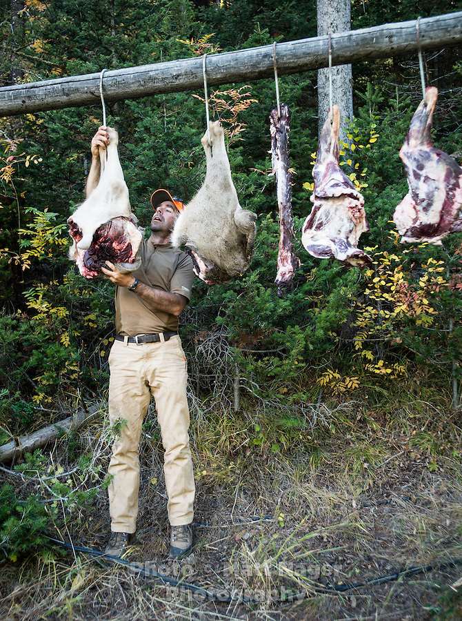 Outdoor Life Editor Andrew McKean hangs meat to cure after a mule deer hunt at Trefren Outfitters on Greyback Ridge in the Hoeback Drainage of Wyoming Region H, outside of Alpine, Wyoming, September 23, 2015. <br /> <br /> Photo by Matt Nager