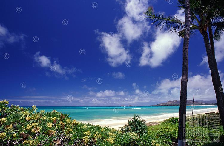 Kailua beach, on Oahu's windward coast, with foliage and trees beneath blue sky