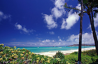Kailua beach, on Oahu's windward coast, with foliage and trees beneath blue sky