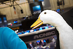 AFLAC Incorporated 12.4.15