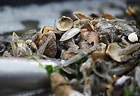 Krebse, Fische und Muscheln aus der Nordsee - 16.08.2018: Fischfang und Rundfahrt von Neuharlingersiel