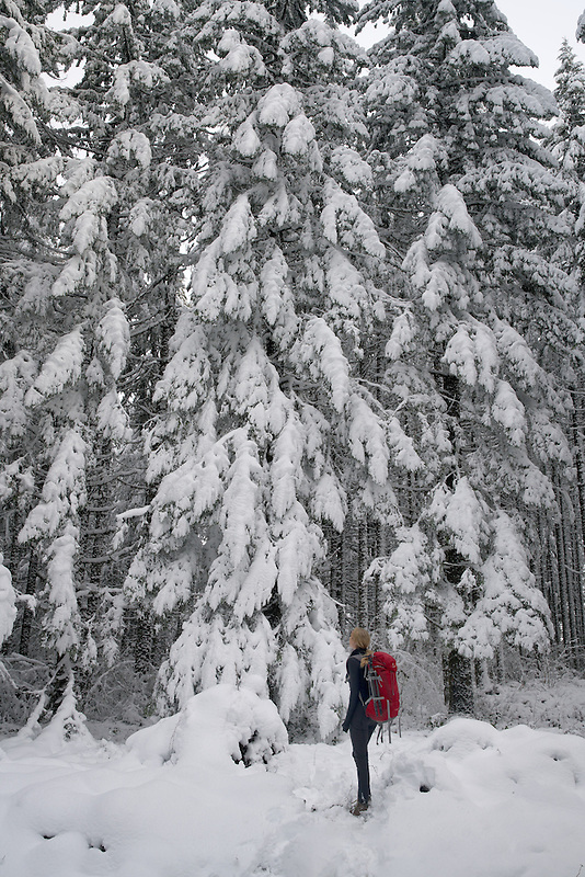 Hiker with backpack in snow covered woods. Oregon Cascades
