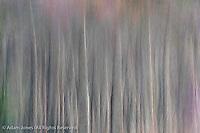 Abstract tree pattern, Great Smoky Mountains National Park, North Carolina