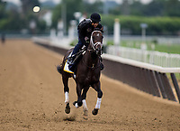 ELMONT, NY - JUNE 07: Nobel Indy gallops in preparation for the 150th Belmont Stakes at Belmont Park on June 07, 2018 in Elmont, New York. (Photo by Alex Evers/Eclipse Sportswire/Getty Images)