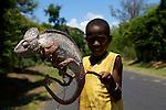 chameleons show on the rn7. children capture cameleon to earn little money from tourists..came?le?ons montres par les enfants au bord de la RN7 vers Sakahara