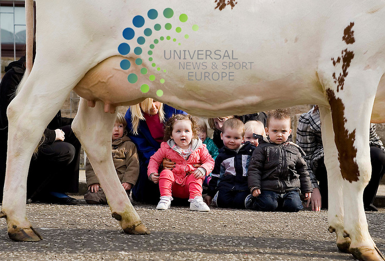 Free milk for nursery children. Announcement of new scheme to.give all youngsters under 5 in Glasgow nurseries fresh milk every day. Dairy.farmer James Rankin will be at a nursery with a live cow to demonstrate.where milk comes from. Little Me Nursery, 7 Aray Street, Maryhill. children of little me nursery Rosie the dairy cow a drink.......universal news and sport. 06/04/2009.