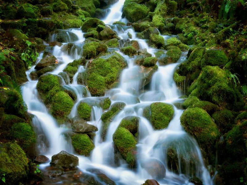 Small seasonal creek with mossy rocks. Silver Falls State Park, Oregon